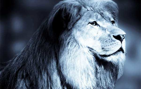 lion 600x380 - Blog